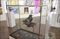 city pigeon.jpg